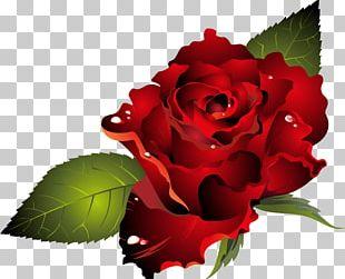 Valentine's Day Dia Dos Namorados Heart PNG