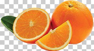 Blood Orange Mandarin Orange Tangerine Bitter Orange Valencia Orange PNG