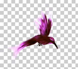 Bird Parrot Flamingo PNG