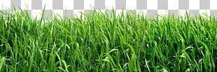 Lawn Artificial Turf Insecticide Insect Repellent Garden PNG