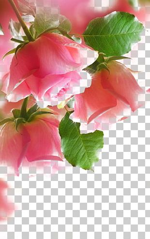 Paper Rose Painting Pink PNG