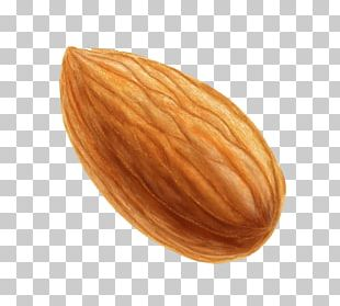 Nut Almond Icon PNG