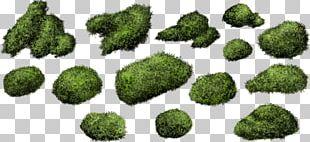 Shrub Moss Bryophyte PNG