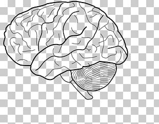 Human Brain Coloring Book PNG Images, Human Brain Coloring Book ...