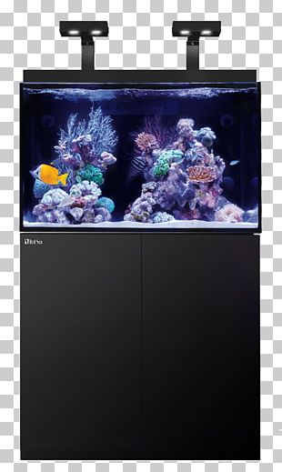 Red Sea Reef Aquarium Coral Reef PNG