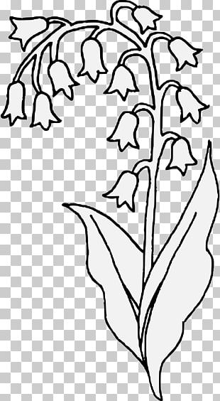 Lily Of The Valley Flower Drawing Plant Stem PNG
