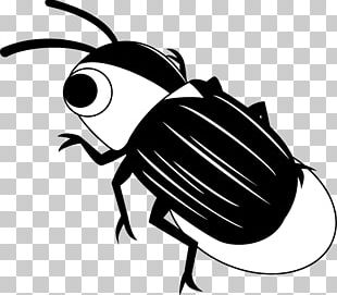 Firefly Insect Illustration PNG