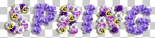 Sweet Violet Viola Sororia Color Spring PNG