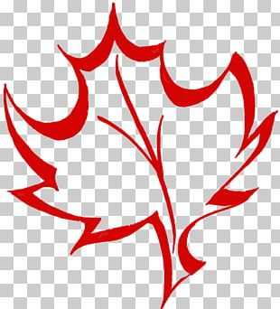 Maple Leaf Canada Sugar Maple PNG
