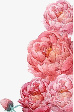 Pink Watercolor Flowers PNG