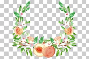 Peach Watercolor Painting Drawing Fruit PNG