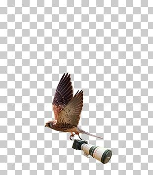 Wildlife Photography Logo Photographer Graphic Design PNG