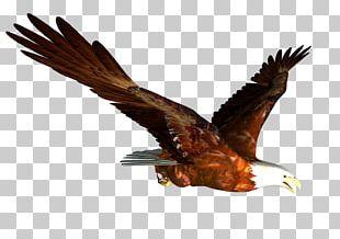 Hawk Mountain Sanctuary Accipitrinae Falconiformes Bird Of Prey PNG