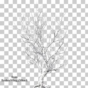 Twig Portable Network Graphics Tree PNG
