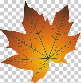 Autumn Leaf Color Cartoon Autumn Leaf Color PNG