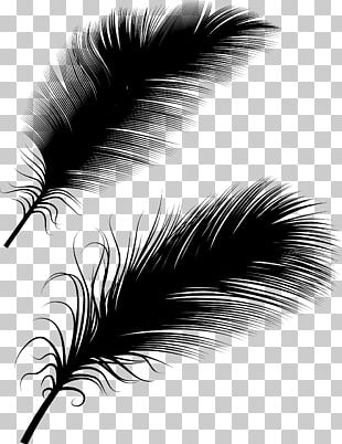 Bird Feather Euclidean Illustration PNG