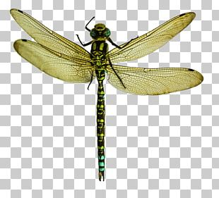Dragonfly Wings Png Images Dragonfly Wings Clipart Free