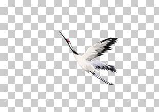 Water Bird Crane Beak Feather PNG