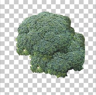 Broccoli Vegetable Food Cauliflower PNG