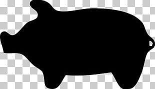 Domestic Pig PNG