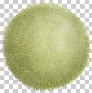 Ball Circle PNG