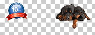 Rottweiler Pet Sitting Puppy Dog Grooming Microchip Implant PNG