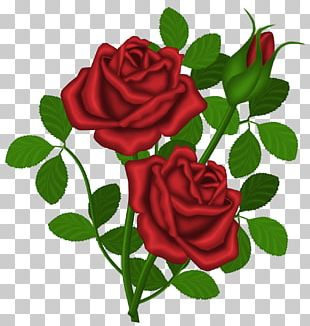 Rose Red PNG
