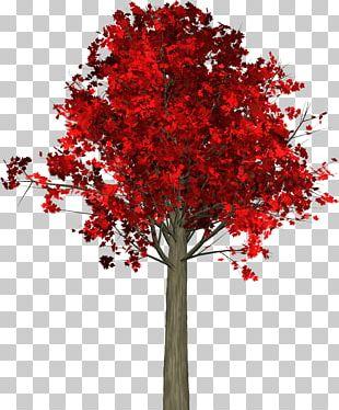 Tree Autumn Leaf Maple PNG