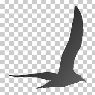 Beak Goose Cygnini Duck Anatidae PNG