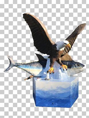Sea Eagle PNG Images, Sea Eagle Clipart Free Download