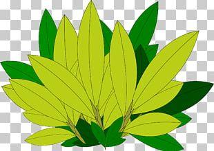 Autumn Leaf Color Tree Desktop PNG