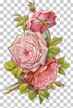 Garden Roses Cut Flowers Floral Design Centifolia Roses PNG
