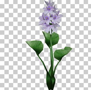 Hyacinthus Orientalis Egyptian Lotus Flower Common Water Hyacinth Plant PNG