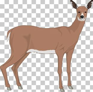 The White-tailed Deer Reindeer PNG