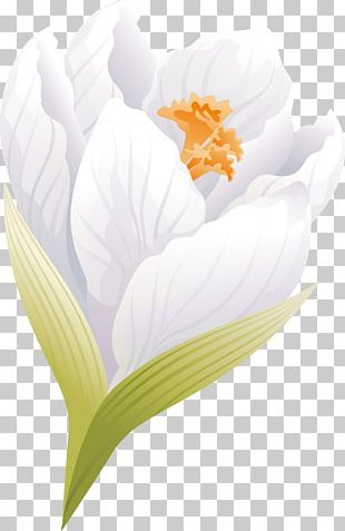 Flowering Plant Petal Flowering Plant Desktop PNG