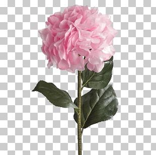French Hydrangea Plant Stem Artificial Flower Rose PNG