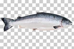 Fish Market Salmon Fish Processing Canned Fish PNG