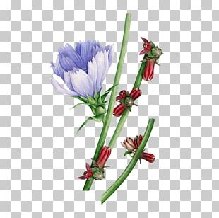 Watercolor: Flowers Watercolor Painting Floral Design PNG