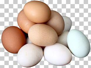 Chicken Egg White Yolk Boiled Egg PNG