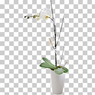 Floristry Moth Orchids Flower Bouquet PNG
