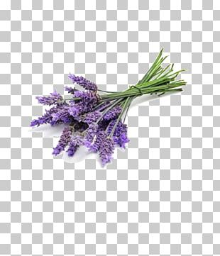 Lavender Oil English Lavender Perfume Essential Oil Odor PNG