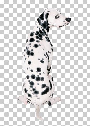 Dalmatian Dog Great Dane French Bulldog Your Puppy PNG