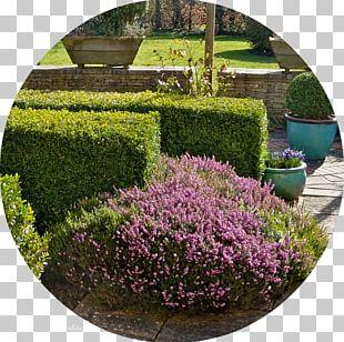 Garden Shrub Landscaping Tree Lilac PNG
