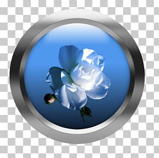 Rose Family Cobalt Blue Petal Flower PNG