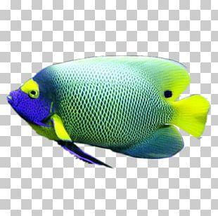 Coral Reef Fish Marine Biology Marine Angelfishes PNG