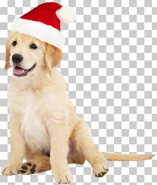 Border Collie Golden Retriever Santa Claus Puppy PNG