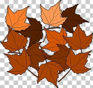 Autumn Leaf Color Maple Leaf PNG