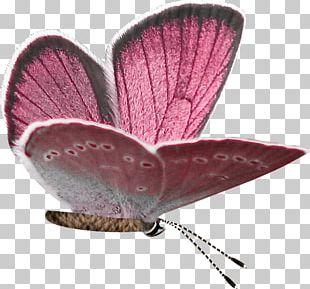 Butterfly Purple PNG