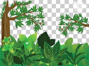 Forest Euclidean PNG
