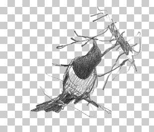 Beak Bird Of Prey Feather Nest PNG